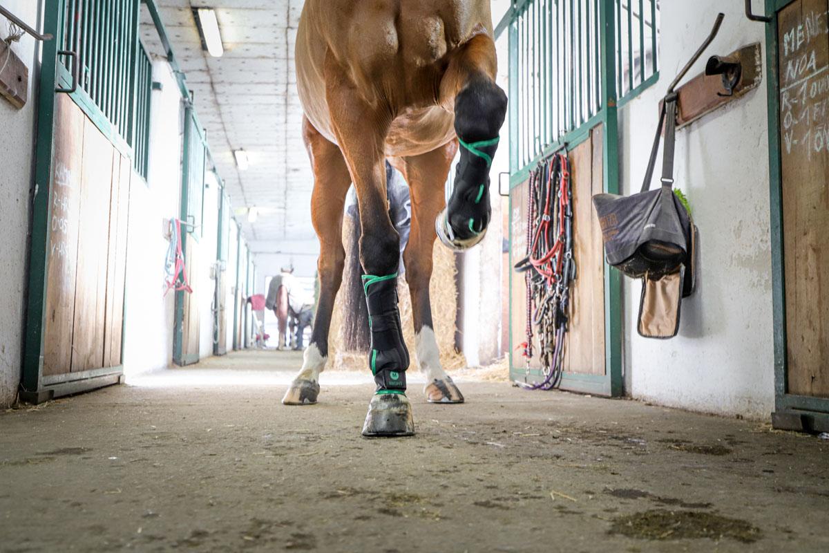 O´Cool horse care