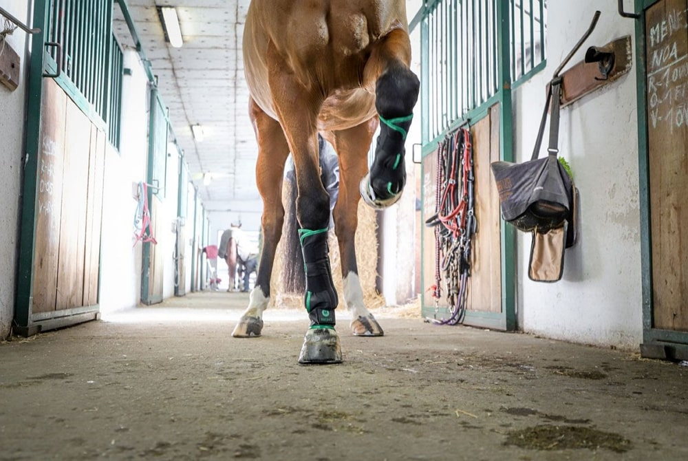 cold water horse therapy boots O´Cool, chladiace gamaše